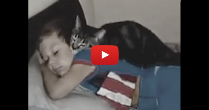 He Left For A Few Days, But When He Came Home… Just Watch What Kitty Does!!