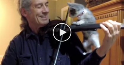 He's Trying To Play The Fiddle, But Then The Kitten Notices… Now Watch What Happens, Adorable!!
