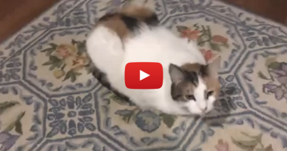 "She Sings ""If You're Happy And You Know It"" But Just Watch The Cats Reaction…"
