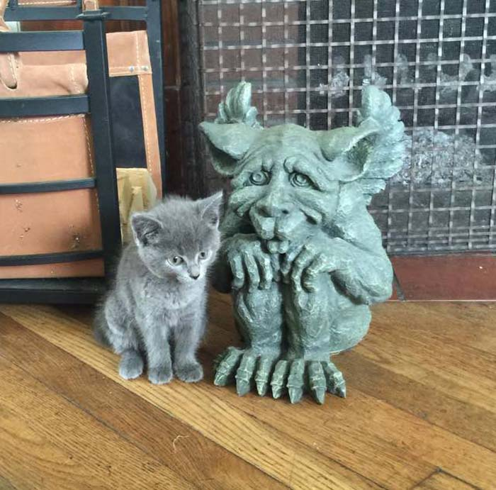kitten_and_gargoyle