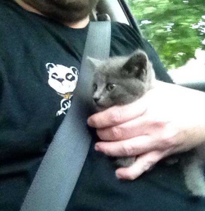 kitten_in_car