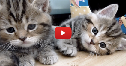 They Got The Kittens A 'Kitty House' But They Aren't Sleeping In It… Just Watch!