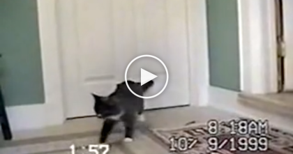 """Oh My Deer Are You Serious?!"" When You See Who Follows This Cat Inside… OMG!!"