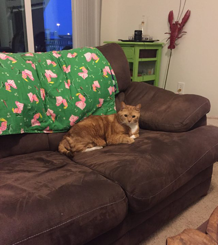 orange_cat_on_couch