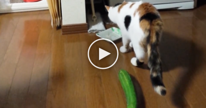 She Was Just Finishing Dinner When…Yikes! Didn't See That Coming, LOL.