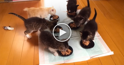 Six Kittens Have Only One Thing On Their Mind…And It's ADORABLE.