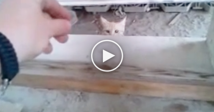 He Spent Over 3 Weeks Feeding This Stray Cat, Just WATCH Them Now… Awwww!!