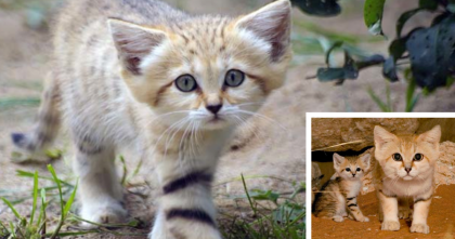 These Cats Are Like Nothing You've EVER Seen…But They're The Cutest EVER, Awwww!!