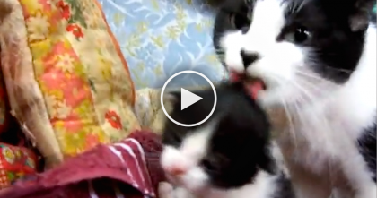 They Found This Cat And Single Kitten, But There Was Something Different… Awww!!