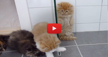 They Gave Their Kittens A New Toy Bug, WATCH What Happens When They Discovers It…