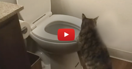 They Heard A Mysterious Noise In The Bathroom, But Nobody Expected To See This…