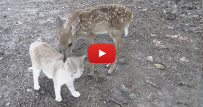 They Rescued This Abandoned Deer, But Then…They Didn't Expect That To Happen!
