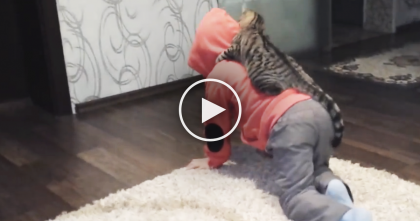 This Cat Jumps On His Human, But The Next Part Is Just Adorable… Awww!!