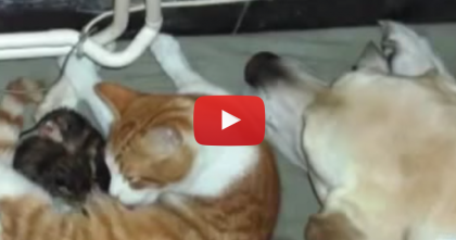 This Dog Notices A Cat Giving Birth, I'm Amazed At What He Did Next… WOW.
