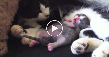 See This Kitten? You've Got To See What Happens When He Starts Dreaming… Oh My!