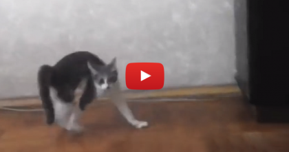 "This Kitty Is Trying To Act ""Scary"" But Doesn't Notice Whats About To Happen…"