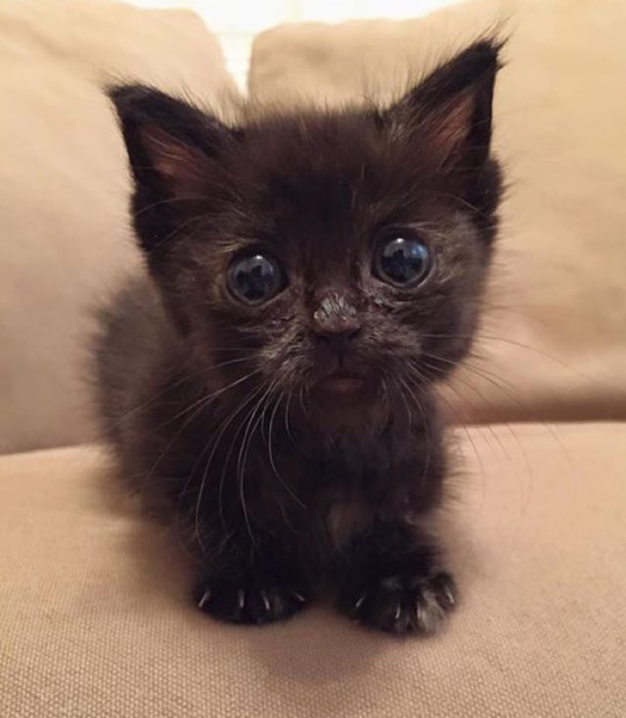 tiny_kitten_google_eyes