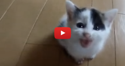"When You Hear This Little Calico Kitten, You'll ""AWWW"" Out Loud… Watch This!"