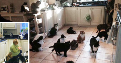 She Loves Cats So Much She Spends £90,000 On Them Per Year… Nearly $150,000!