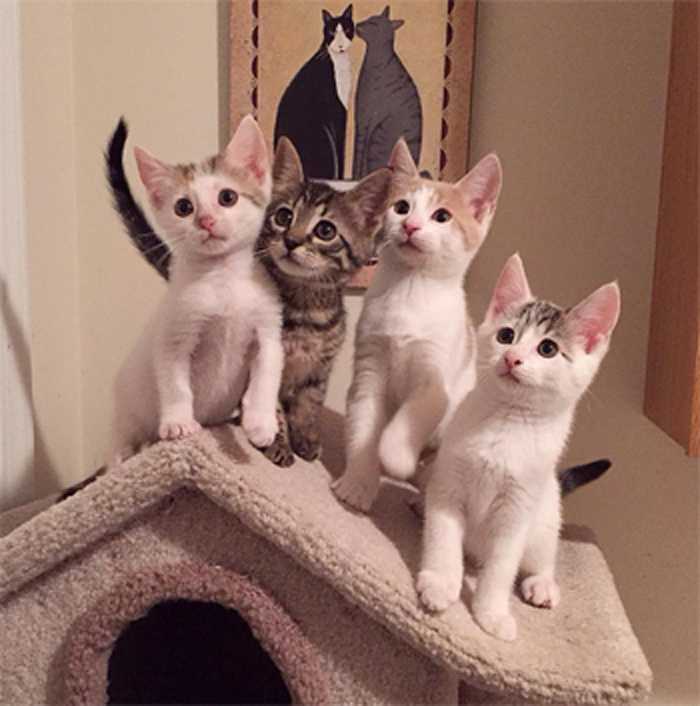1_Kittens_on_post