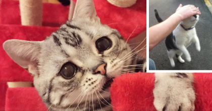 25 Struggles That Every Cat-less Cat Lover Will Understand… #5 Is HILARIOUS…
