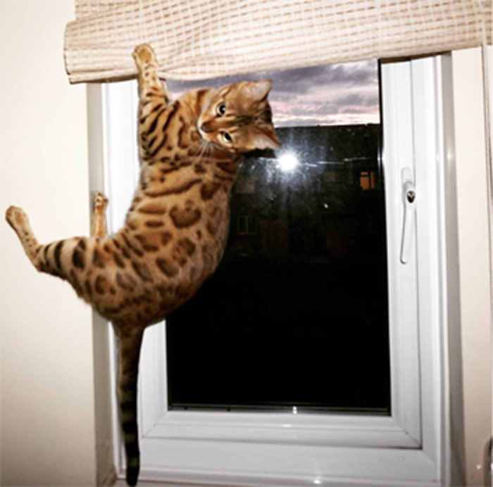 5_cat_climbing_window