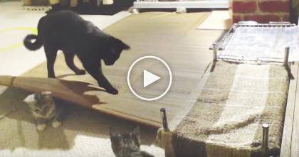 This Is What Happens When You Leave Your Cats Alone At Home… TOO Funny!