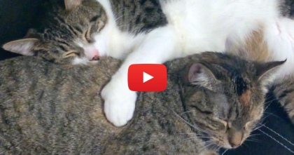 After Rescuing This Kitten, You Gotta See What He's Doing Now… Awwwww!!