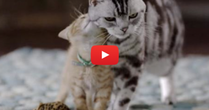 Big Kitty Decides It's Time To Teach Little Kitten Some Tips… The Ending Is HILARIOUS.