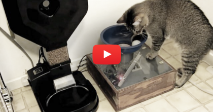 He Came Up With A Genius Game To Keep His Cat Busy… You're About To See It!