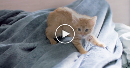 "Dear Kitten: ""I Need To Give You A Little…History Lesson"" This is just adorable… WATCH."
