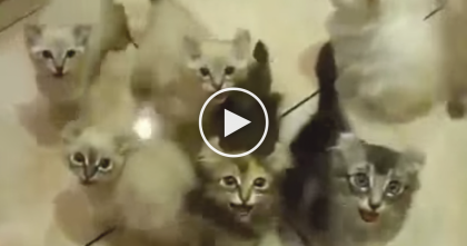 She Brings Out The Food, But When The Kittens See It…You've Gotta Hear The Response!