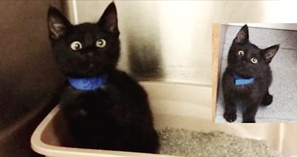 Orphaned Kitten Is Catching Everyone's Attention With Special Googly Eyes…WOW!