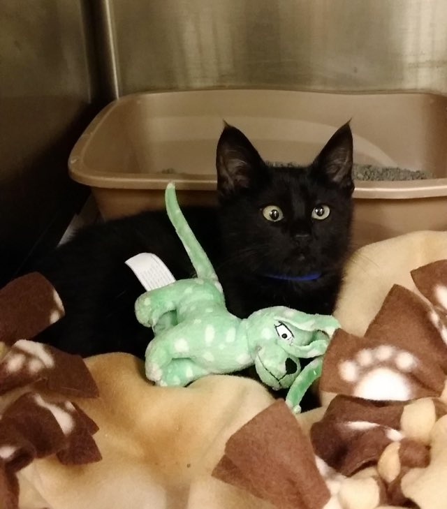 googly-eye-kitten-adopt