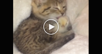 Her Chirping Birdie Won't Calm Down, But Watch What Kitty Does Next… OMG!!