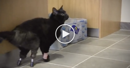 Kitty Lost Two Legs From A Combine And Nearly Died, But Weeks Later… Truly Unthinkable.