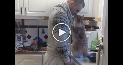 When You See What This loving Ginger Kitty Is Doing To His Owner, Your Heart Will Melt…