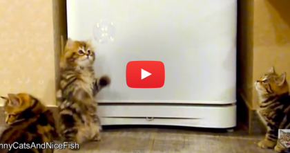These Kittens Discover 'Bubbles' For The First Time, Just Watch Their Expressions… Awww!!