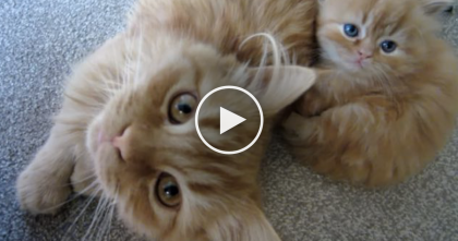 This Adorable Kitty Family Is About To Steal Your Heart…And You're About To See Why, Awwww!!