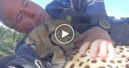 Big Kitty And His Best Friend Share The Most Amazing Moment Together… WOW.