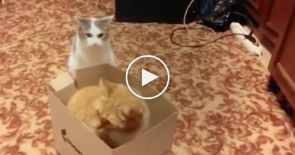 This Cat Let His Guard Down For Just One Second, But Then… SOO Funny, Just Watch!!