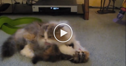 When Momma Says Its Bath Time, This Kitten Can't Avoid The Double Power Wash… Haha!!