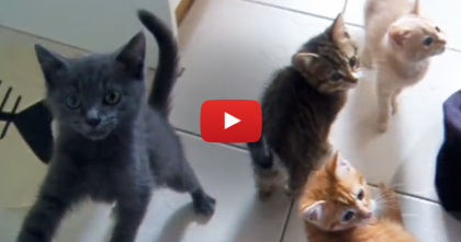 When These Little Kittens Get Hungry, You Gotta See What Happens… Oh My WORD.