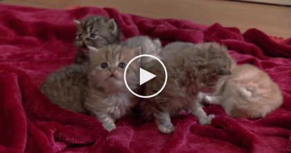When You See All The Kittens In This House…It's Just TOO Cute, Watch!!