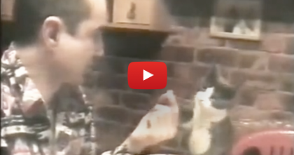 When You See The Way This Cat Request For Some Food… It's Truly Incredible!