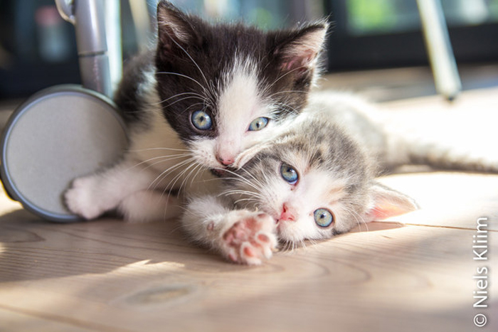 2_kittens_playing