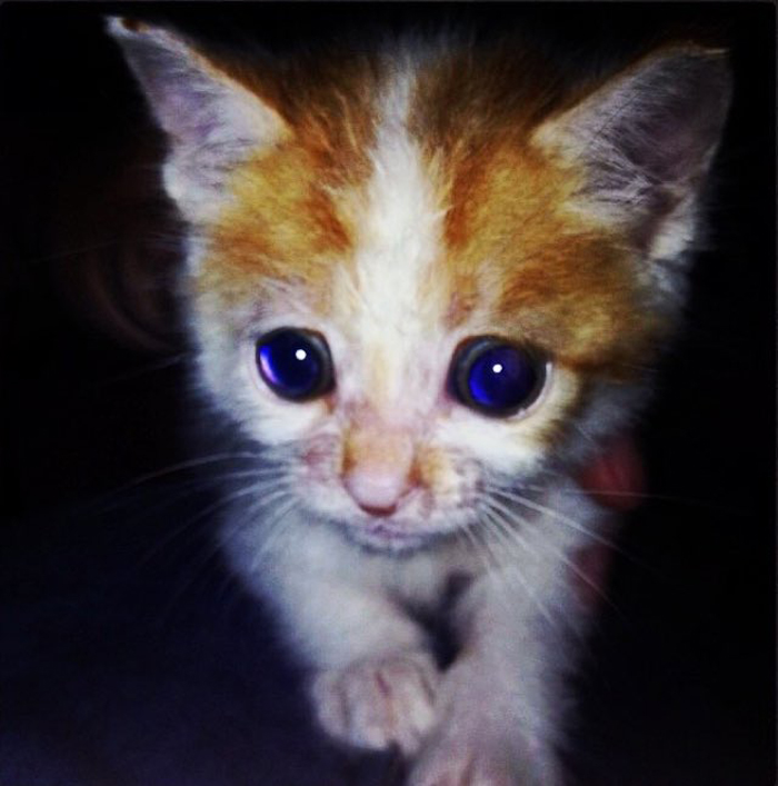 Big_eyes_tiny_kitten