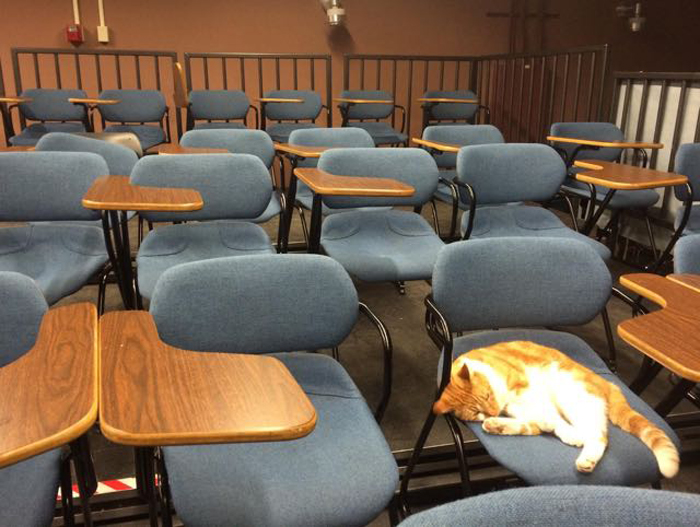 Bubba_sleeps_in_classroom