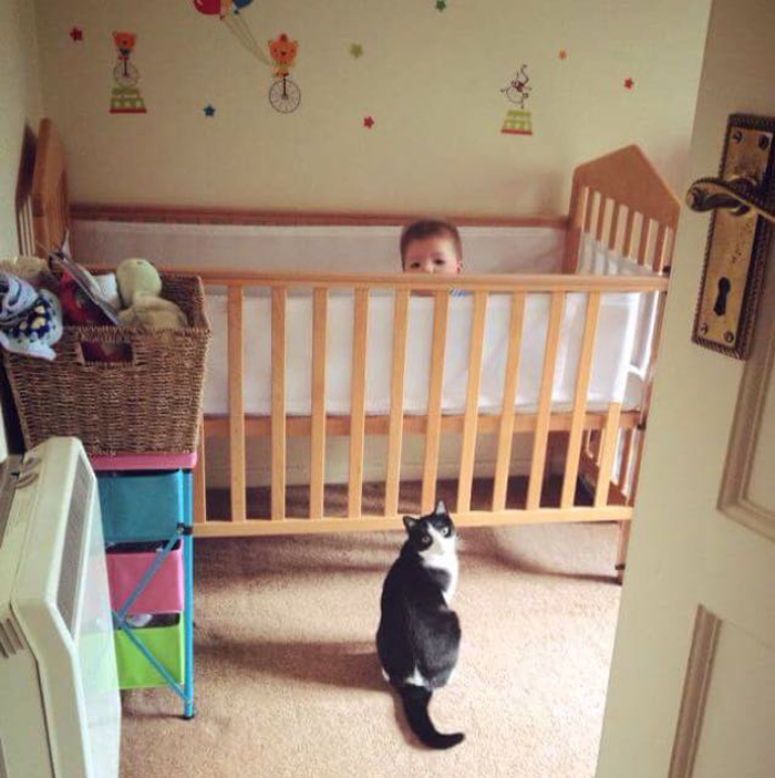Cat_in_front_crib
