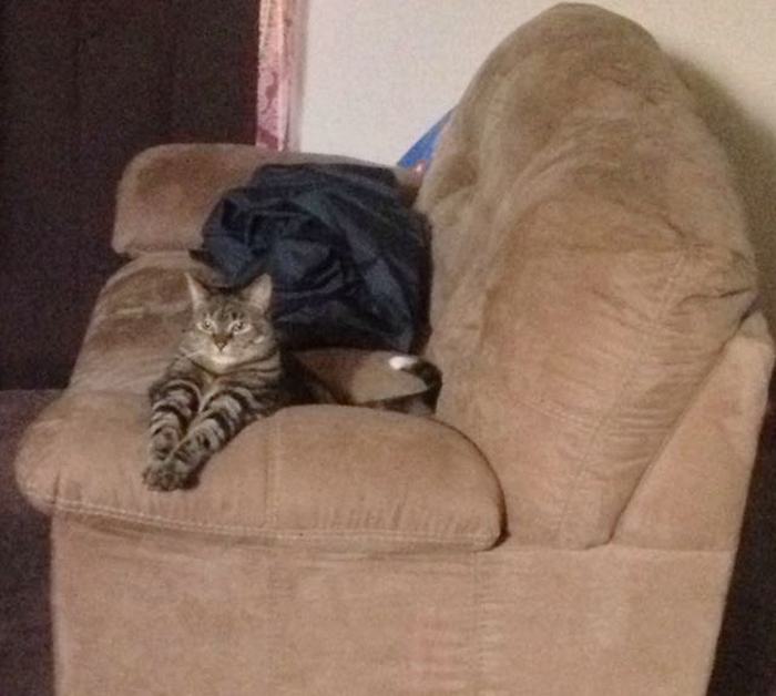 Cat_on_couch